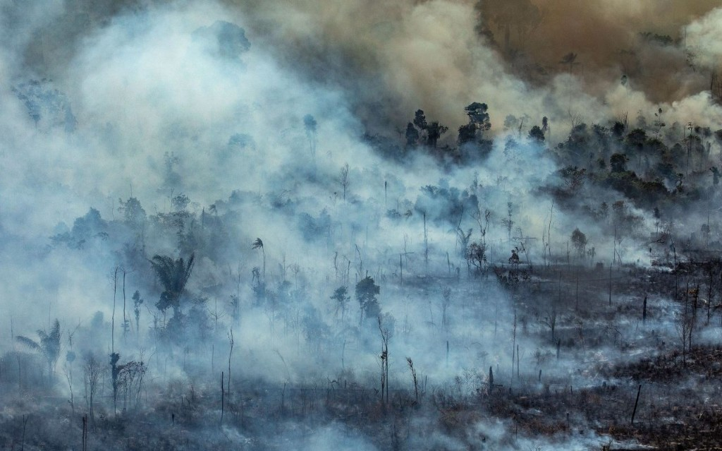 We will never save the rainforest until a living tree is worth more to Brazil than an incinerated one