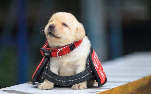 World's best job? Get paid to hang out with puppies and kittens