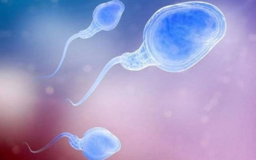 Sperm of infertile men is healthy before it begins journey out of body, major breakthrough finds