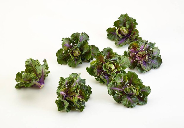 Move over kale - we're all eating 'kalettes' now