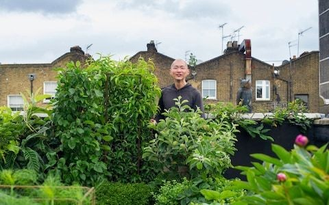 How to grow herbs and flowers on the roof, by a supplier to top chefs