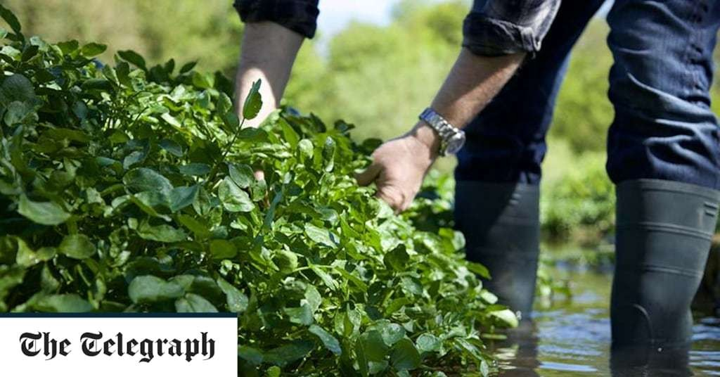 The quiet Hampshire town that's obsessed with watercress