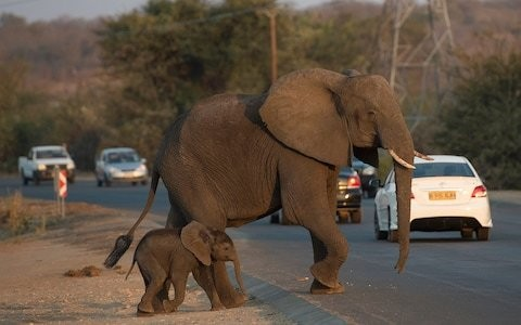 Bitter human-elephant conflict undermines Botswana's leading conservation efforts