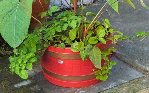 How to use containers in your garden