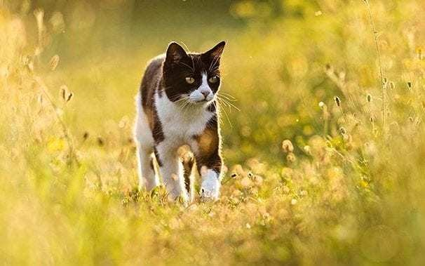 Kill unwanted stray cats and keep the rest indoors, says US academic
