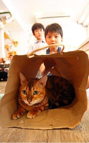 Cake And Cats In Bangkok