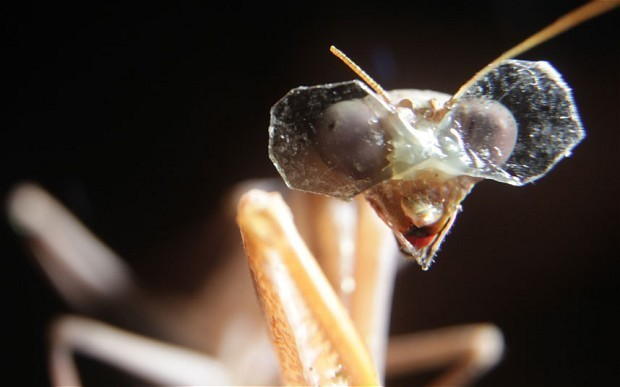 3D goggles for insects could lead to robot breakthrough