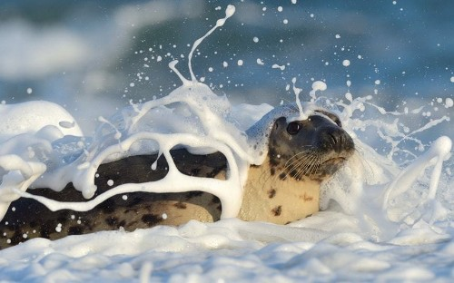Animal photos of the week: 9 January 2015