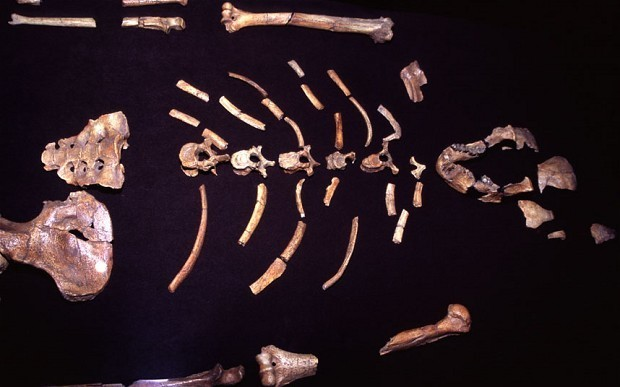 Who is Lucy the Australopithecus and why was Barack Obama allowed to touch that fossil?