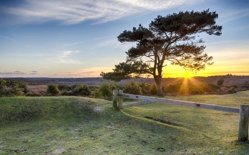 15 photographs that prove the New Forest is the UK's most underrated national park