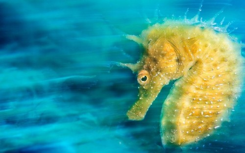 Underwater Photographer of the Year 2016, in pictures - Telegraph