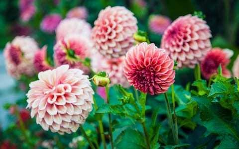 Top 25 plants to grow in autumn