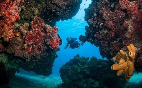 Caribbean coral reef could be destroyed to make way for cruise ships in the Cayman Islands