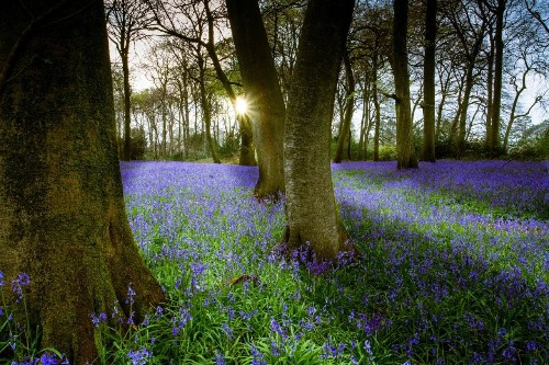 Seven wonders of British springtime you must see before it's too late