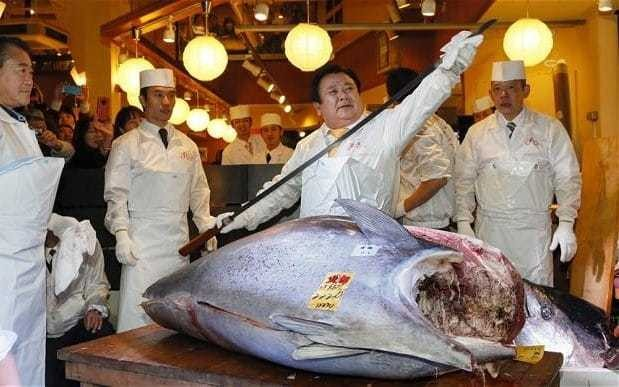 Bleak outlook for sushi favourite as bluefin tuna levels drop 97 per cent