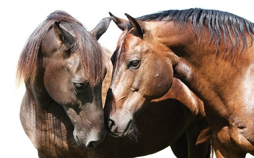 Horse/Human: An Emotional Bond, in pictures - Telegraph
