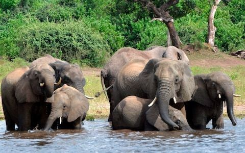 African nations call for an end to ivory ban