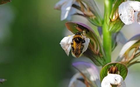 Ken Thompson: the quiet battle for pollen between flowers and bees