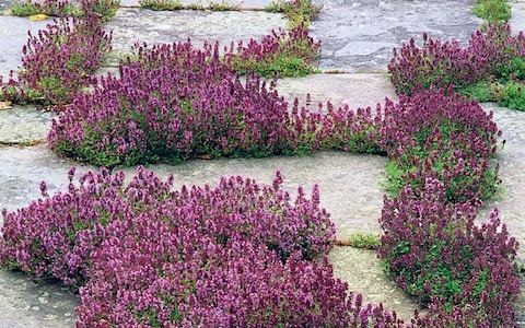 How to kill weeds in your paving