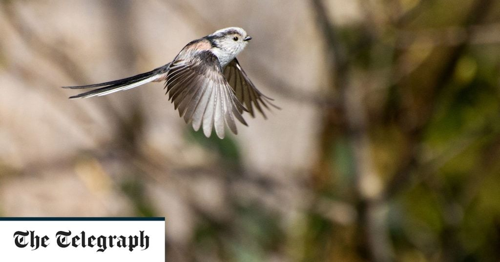 Maths developed by Alan Turing used to understand bird behaviour