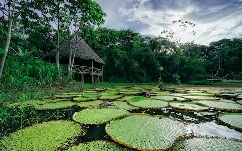 Explore the jaw-dropping flora and fauna of the Peruvian Amazon
