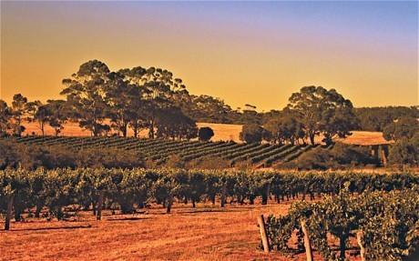 Hot tips on Australian wines