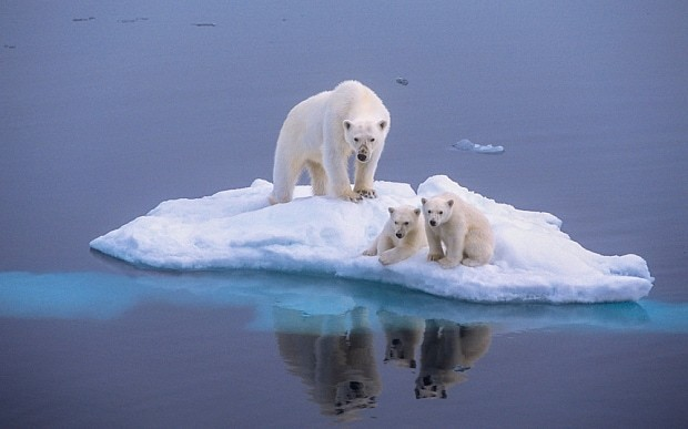 Polar bears 'have started eating dolphins due to climate change'