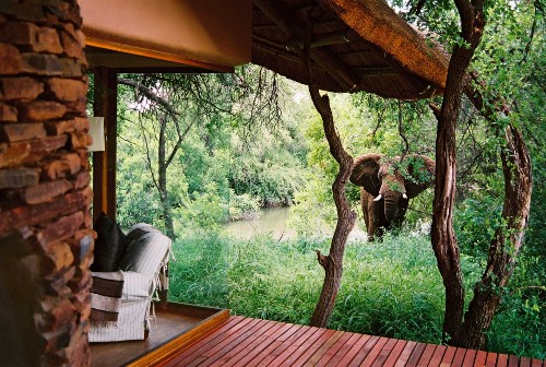 The world's best animal-themed hotels