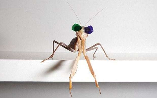 Scientists prove that insects use 3D vision after fitting them with tiny 3D glasses