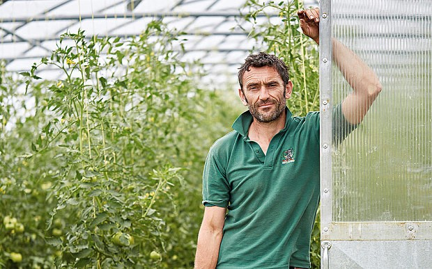 From seed to farm shop: how your tomatoes are grown