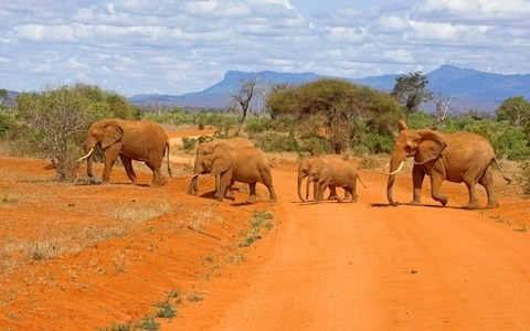 Donald Trump reverses ban on elephant trophy imports into US
