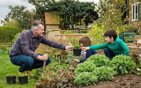 50 best plants perfect for a family garden
