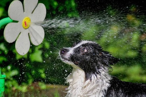 'Mischievous Pets' photography competition - Telegraph