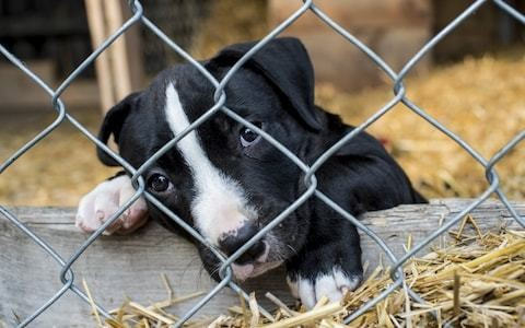 Illegal puppy farm reports soar as celebrity dogs on social media fuel demand