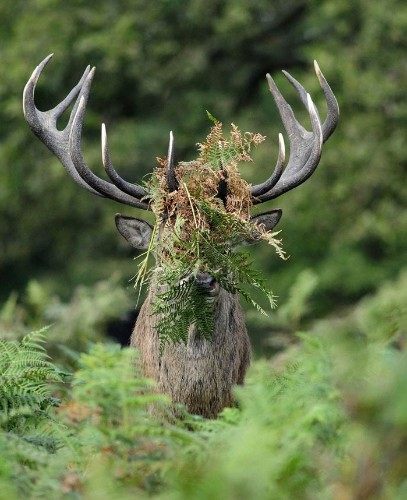 Comedy Wildlife Photography Awards 2015: even more of the best entries so far