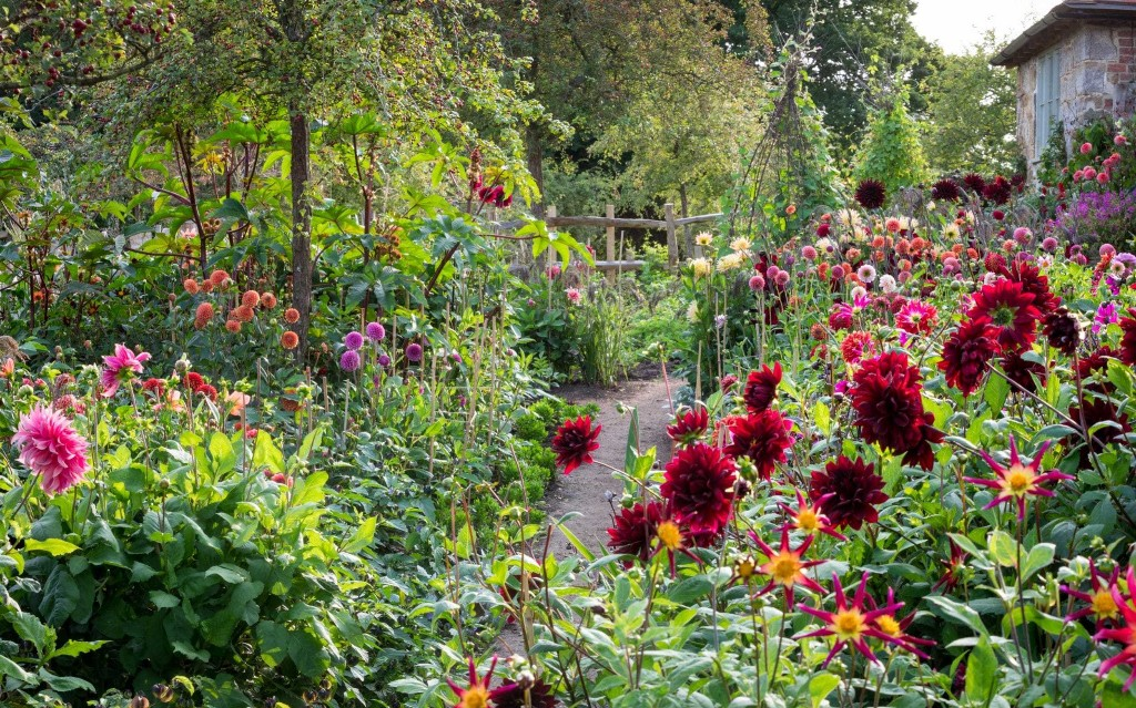 How to take good photos of your plot, by gardening expert Helen Yemm