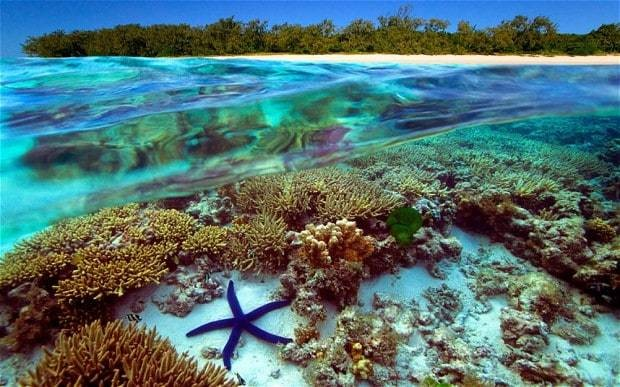 Coral reefs are 'likely to disappear from the Earth' despite climate change talks
