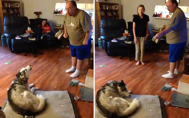 Watch: Husky gets telling off for eating potato skins