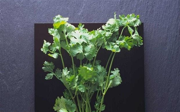 Diana Henry cooks with coriander
