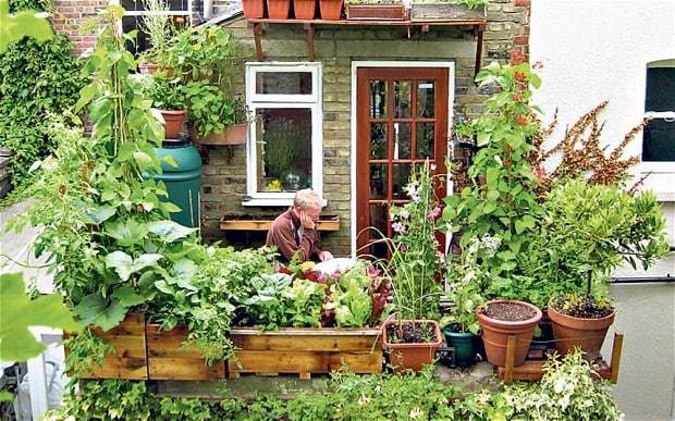 Urban gardening: how to go green in the city