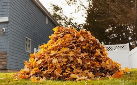 Why I hate leaf blowers, the noisy, polluting tool of insect Armageddon