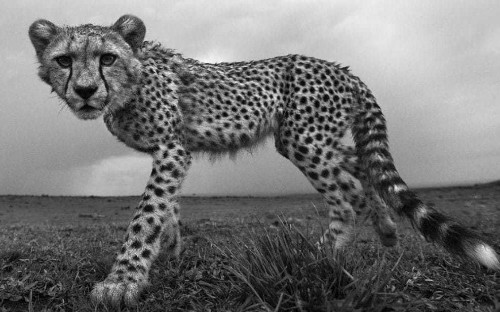 Call of the wild: photographer Anup Shah on capturing the perfect shot