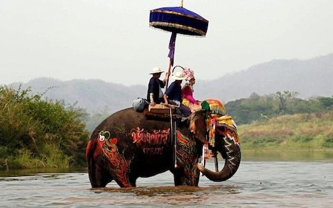 Elephant riding to be banned under holiday company guidelines, British Travel Association announces