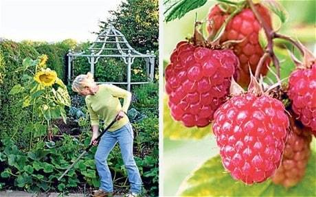 Make a beautiful fruit cage for your garden