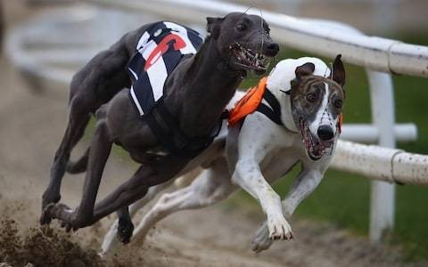Gone to the dogs: why the future of greyhound racing in the hands of the bookies