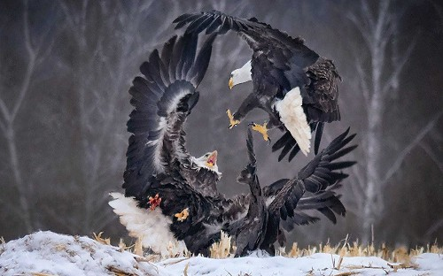 Spectacular entries from SINWP Bird Photographer of the Year 2019
