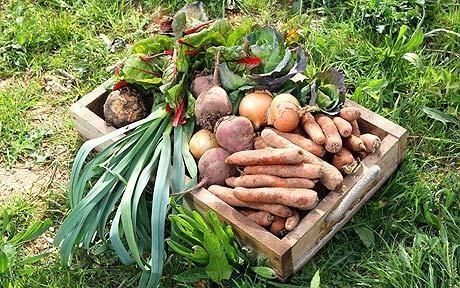 Are organic veg boxes worth the money?