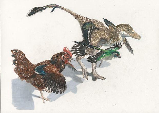 Graphic: How Tyrannosaurus rex evolved into modern bird
