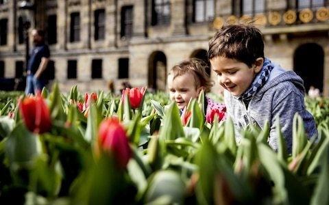 Tourists tricked as one per cent of tulip bulbs in Amsterdam's famous market will bloom, study reveals