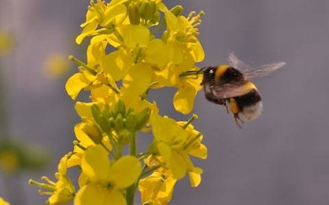 RSPB resigns from government's pesticides forum after chemical use soars